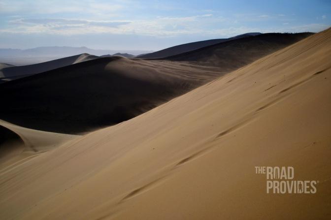 Lagartijas del desierto