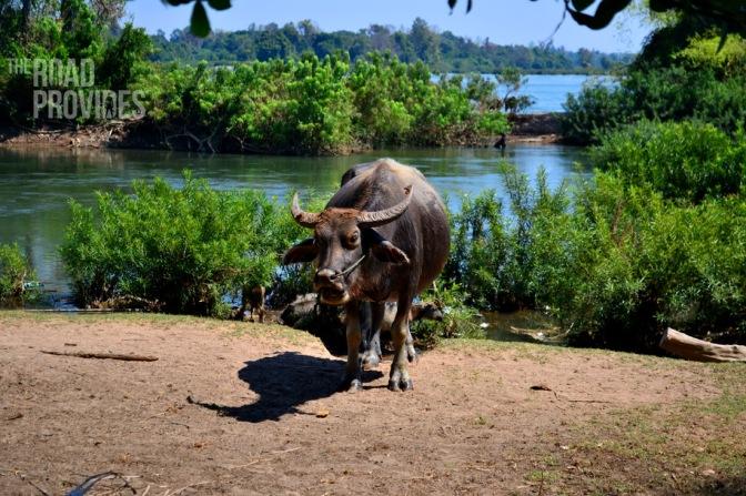 Laos, las mejores imágenes