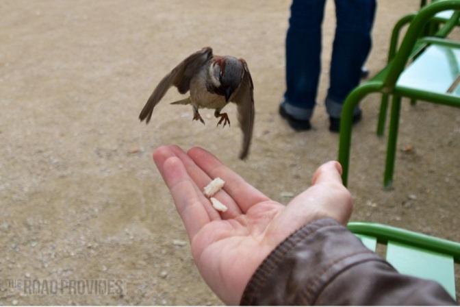 Pájaros, simples pájaros